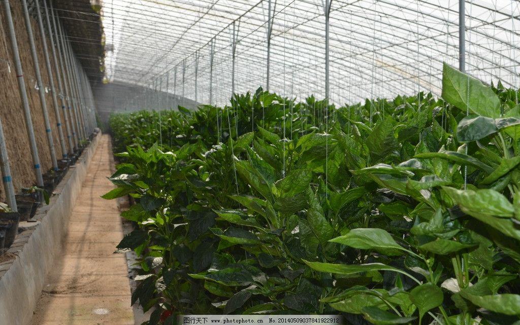 大棚 农业 农产品 蔬菜 农业科技 农业生产 现代科技 摄影 300dpi jpg