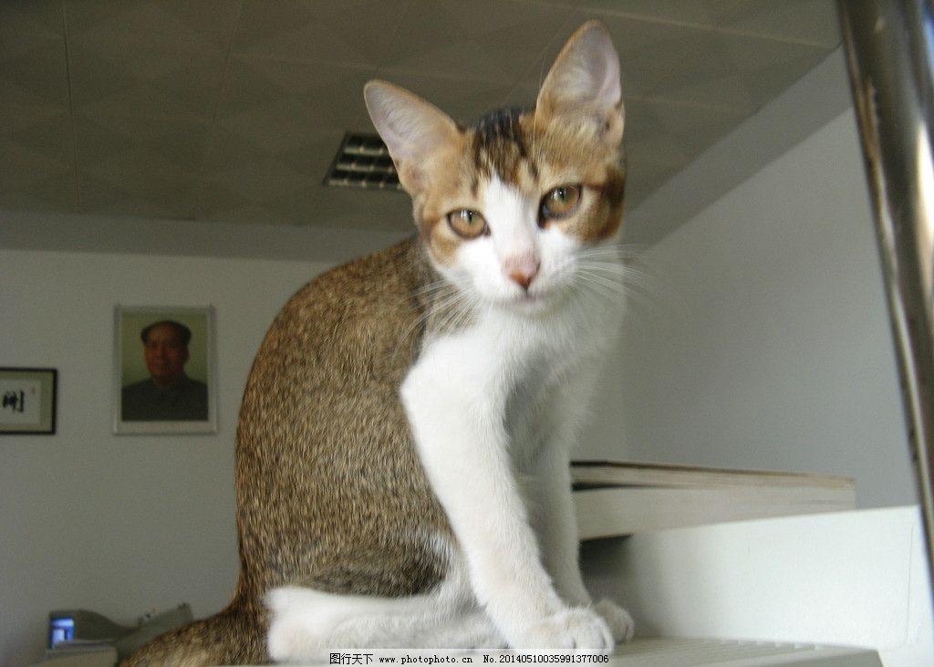 小猫 猫 摄影 动物 宠物 哺乳动物 家禽家畜 生物世界 180dpi jpg