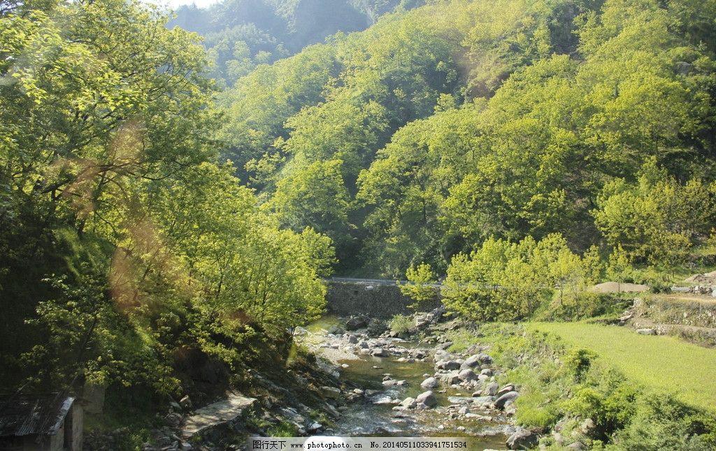 森林 大山 岩石 石头 树木 树林 景观 青山 树叶 松树 山林