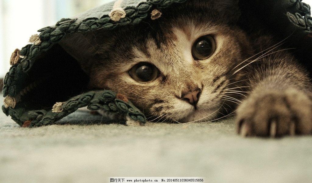 猫咪 背景 摄影 高清 桌面