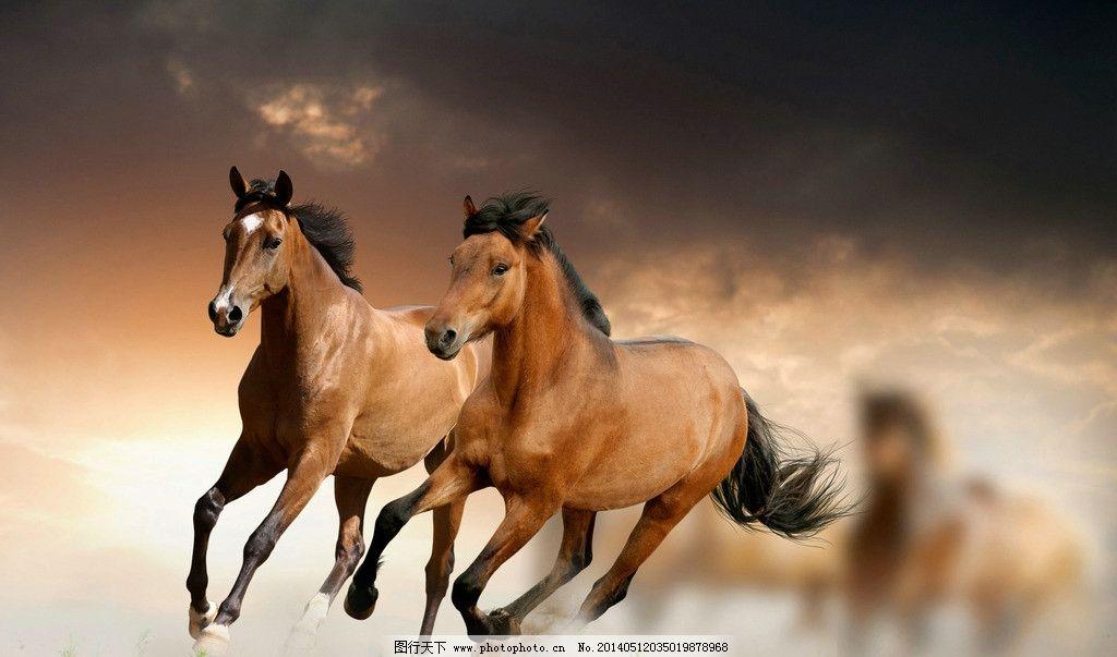 烈马 野马 千里马 沙场 飞奔尘土 奔跑的骏马 鬃毛 野生马 野生动物