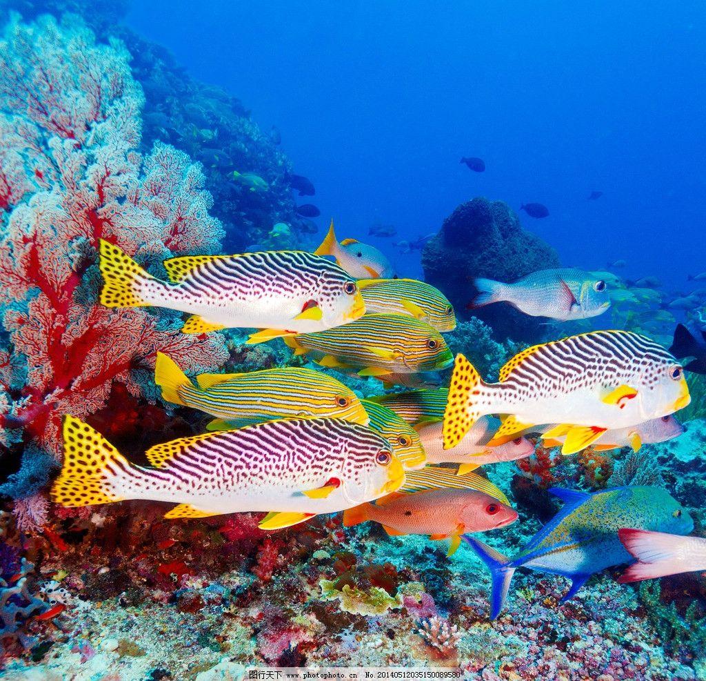 海洋生物 鱼 海底 珊瑚 鱼群 海底世界 大海 生物世界 鱼类 摄影 300图片