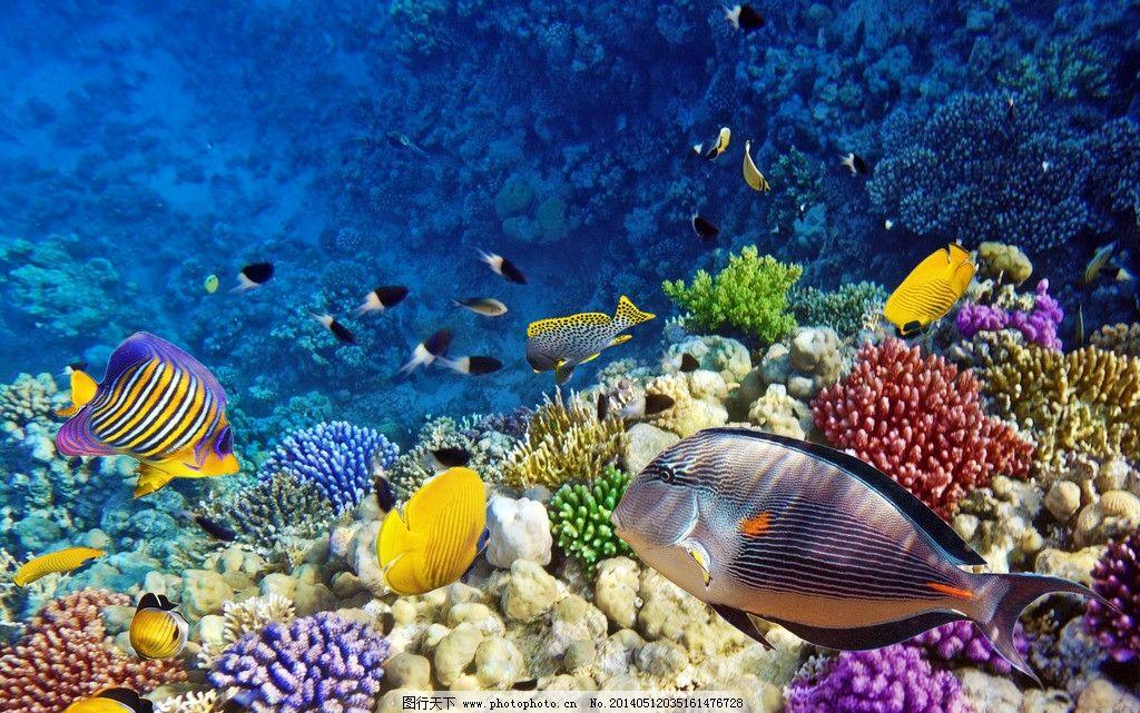 海洋生物 鱼 海底 珊瑚 鱼群 海底世界 大海 生物世界 鱼类 摄影 300