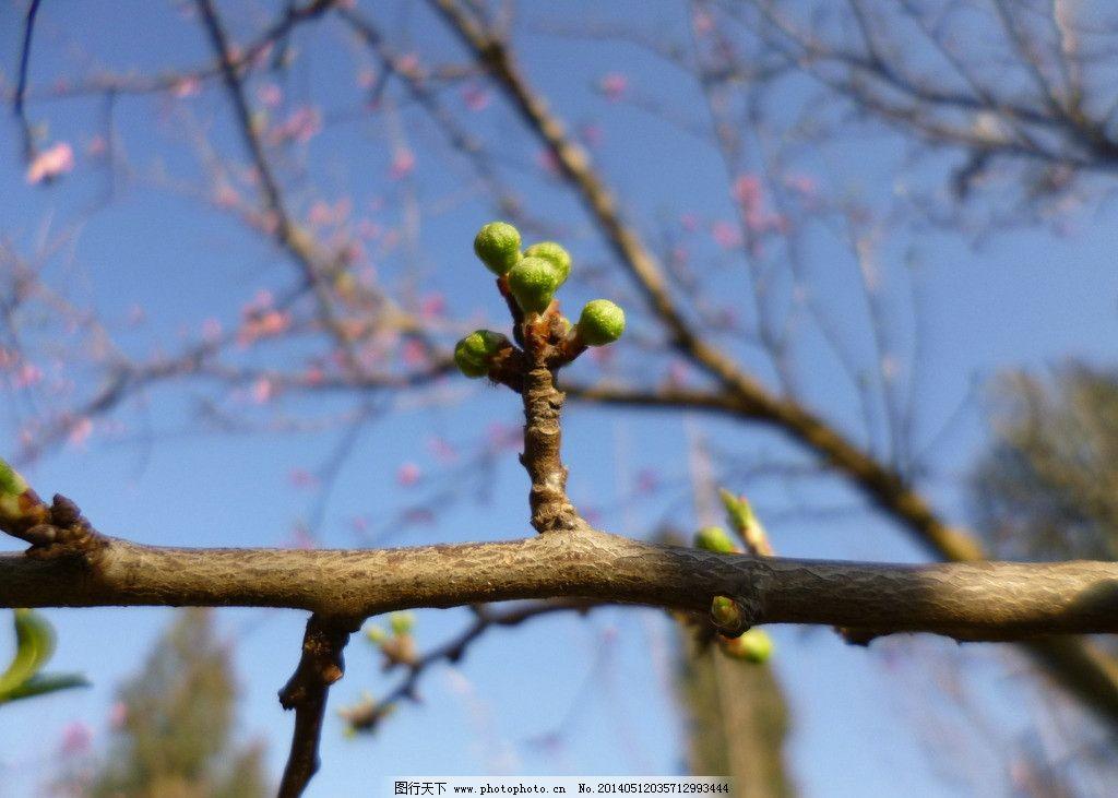 果树 植物 花卉 树木 蓝天 花草 生物世界 摄影 180dpi jpg