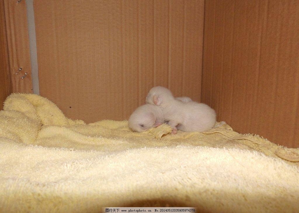 猫仔 小猫 乳猫 奶猫 幼猫 家禽家畜 生物世界 摄影 300dpi jpg