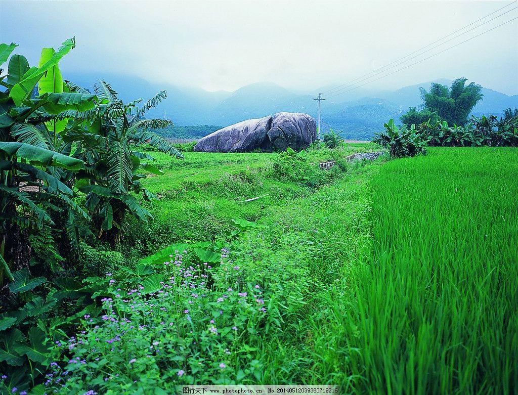 绿色植物图片
