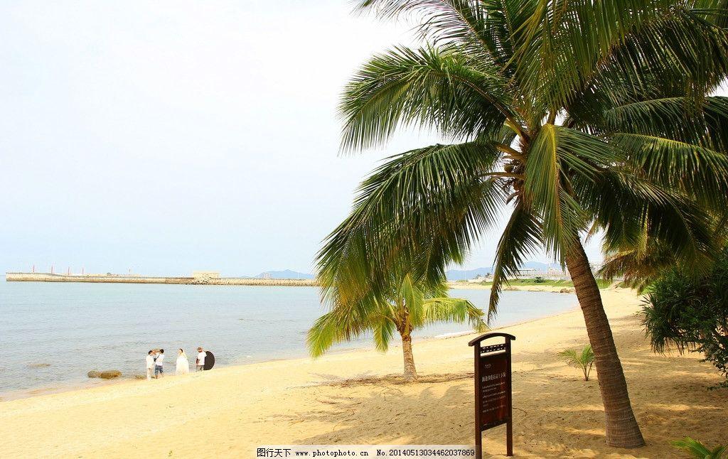 海南椰树图片