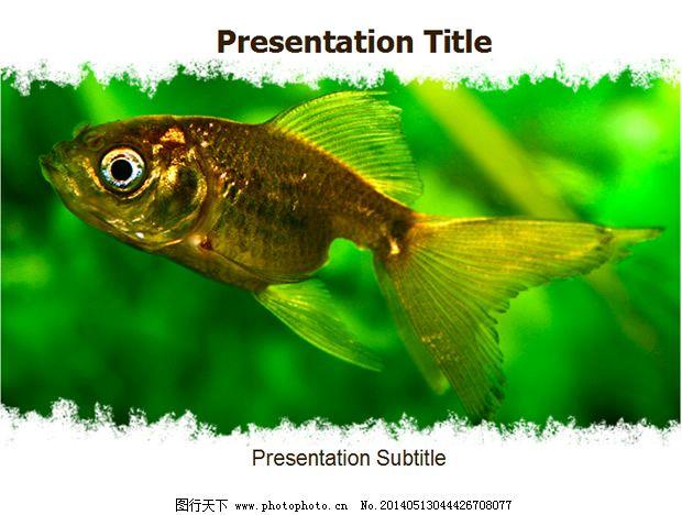 鱼ppt模板免费下载 ppt模板