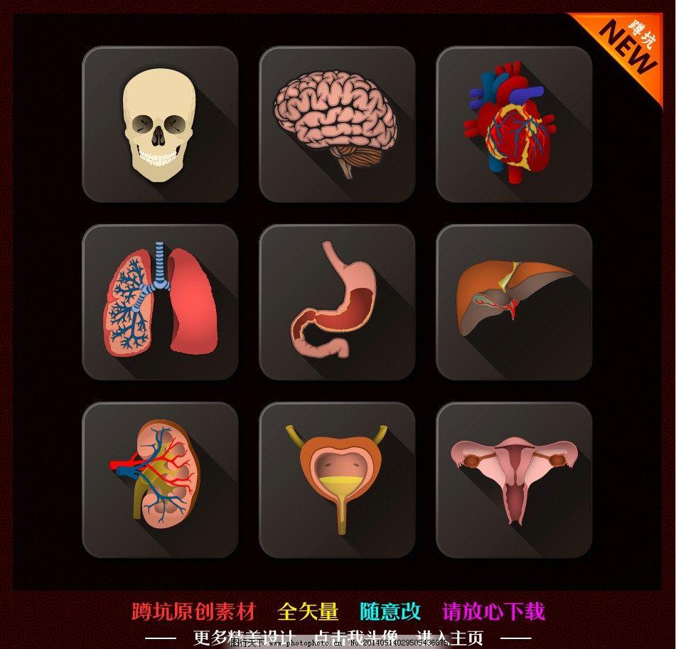 心脑肝肺胃肾膀胱子宫 肝脏 肺部 大脑 心脏 人体结构 医疗 内脏