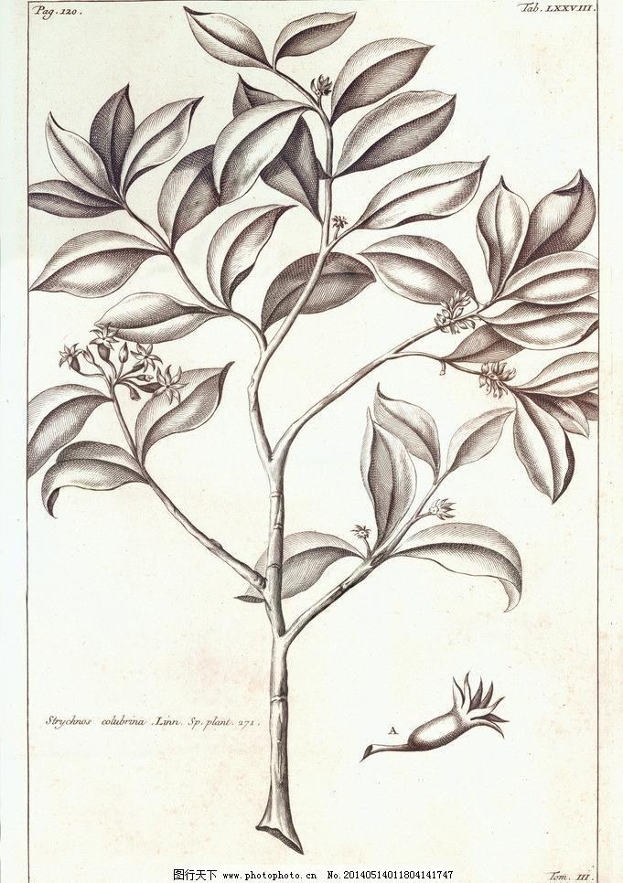 无框画 叶子 植物绘画设计素材 植物绘画模板下载 植物绘画 植物 树叶