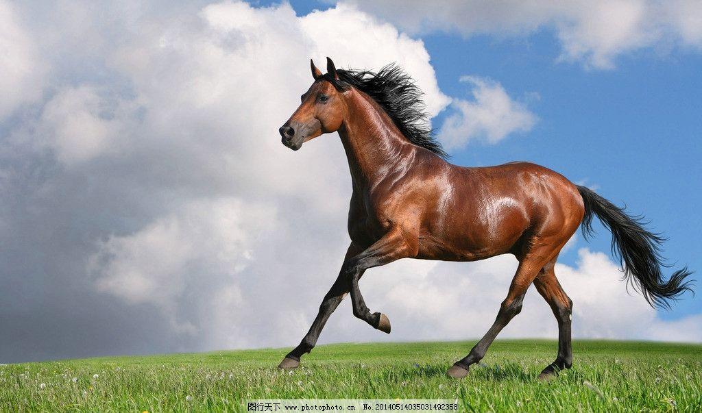 千里马 沙场 飞奔尘土 奔跑的骏马 鬃毛 野生马 马气势 骑士 野生动物