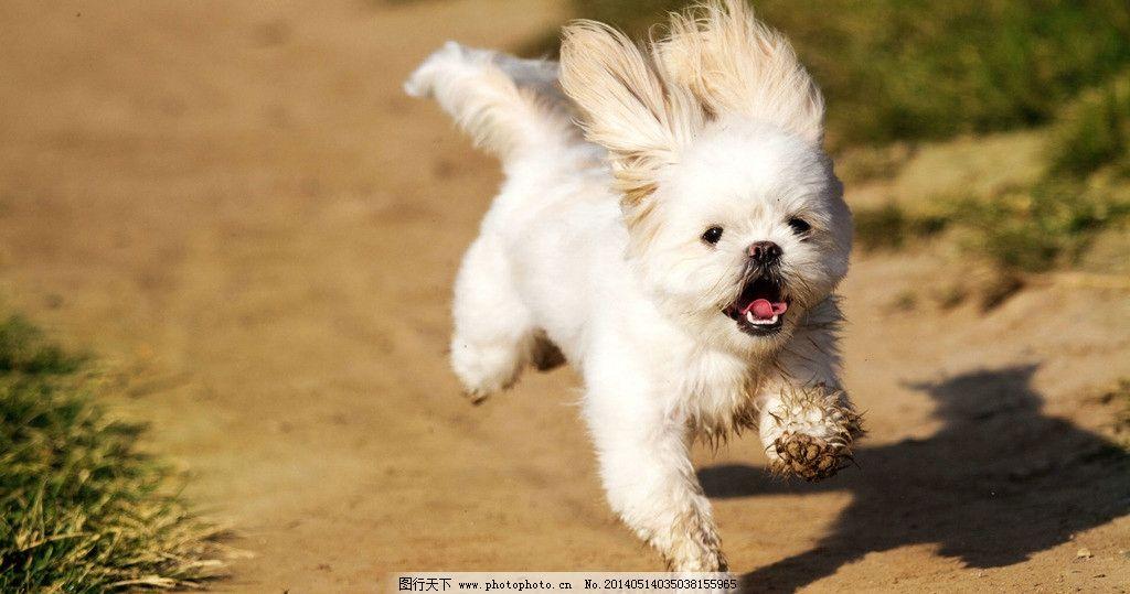 奔跑的动物图片