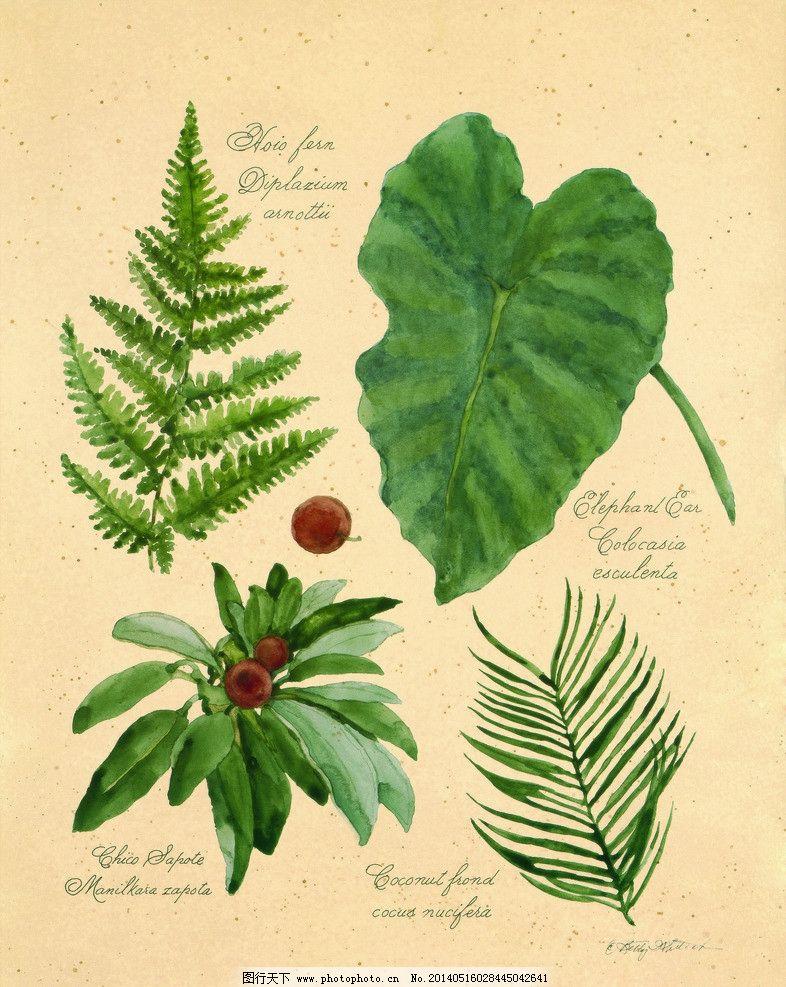 无框画 装饰画 树叶 药材 草本植物 中草药 花卉 植物 植物标本 创意