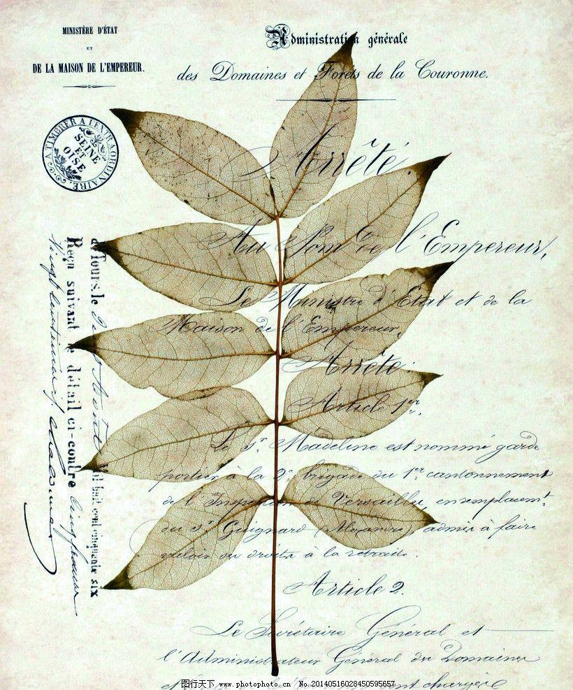 植物标本图片_无框画_环境设计_图行天下图库