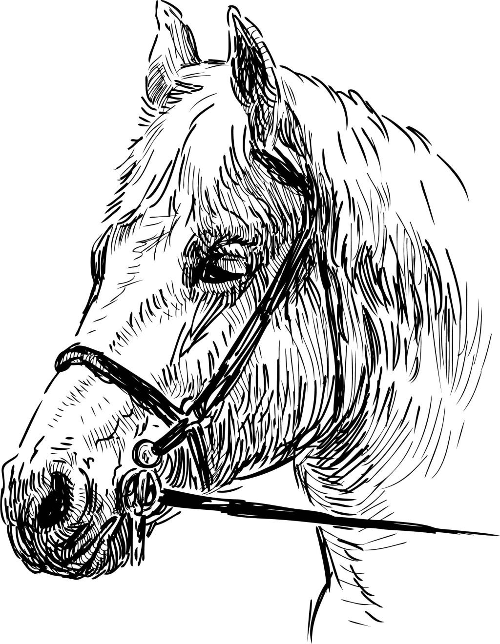 可爱马头简笔画