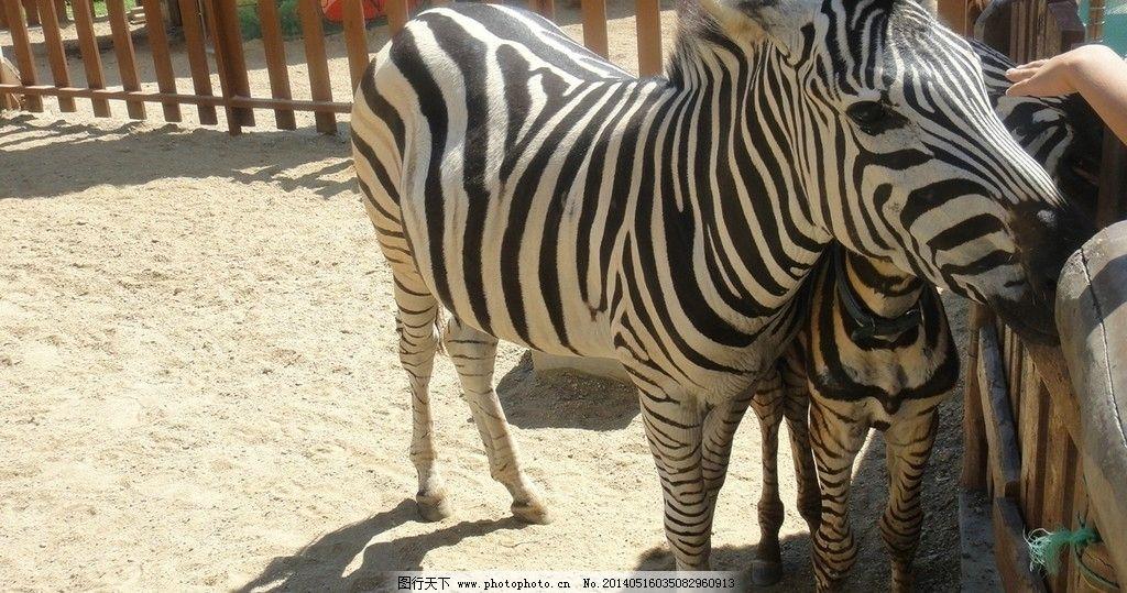 大连野生动物园图片