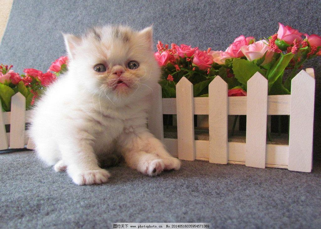 加菲猫幼崽图片