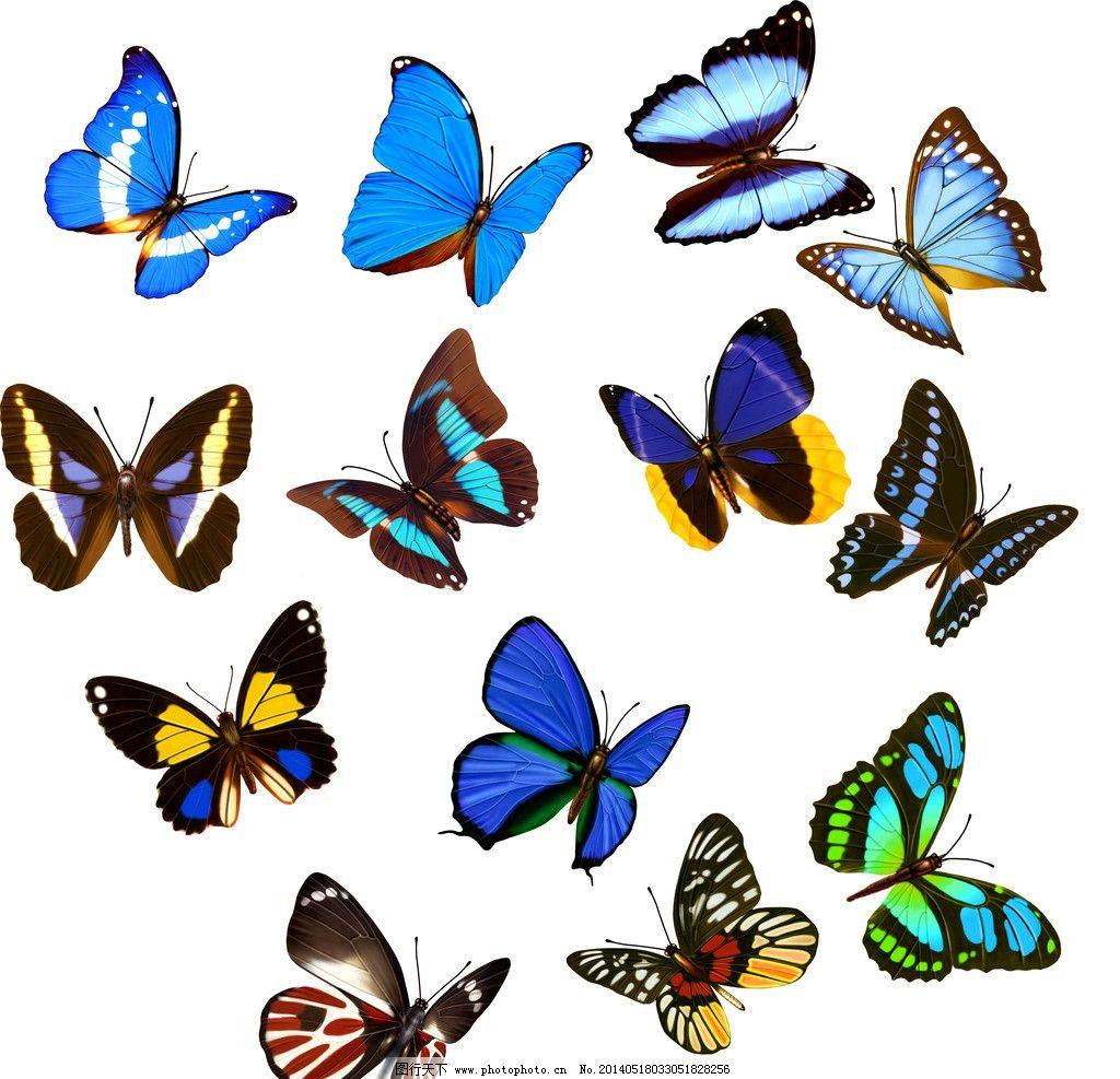 蓝色 蝴蝶 蝴蝶设计 各种蝴蝶 蓝色蝴蝶 精美蝴蝶 蝴蝶花纹 手绘蝴蝶