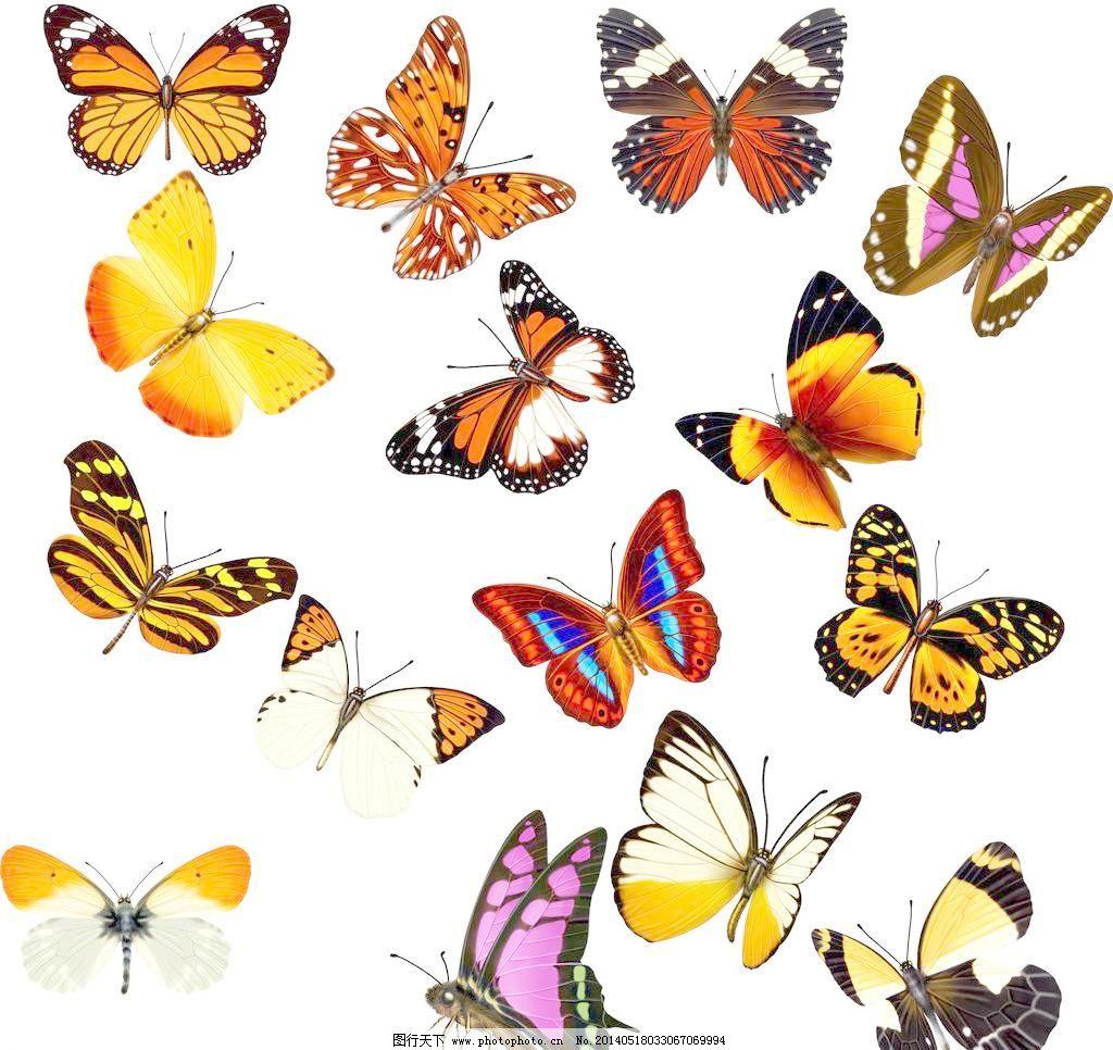 蝴蝶 蝴蝶设计 各种蝴蝶 红色蝴蝶 蓝色蝴蝶 精美蝴蝶 蝴蝶花纹 手绘