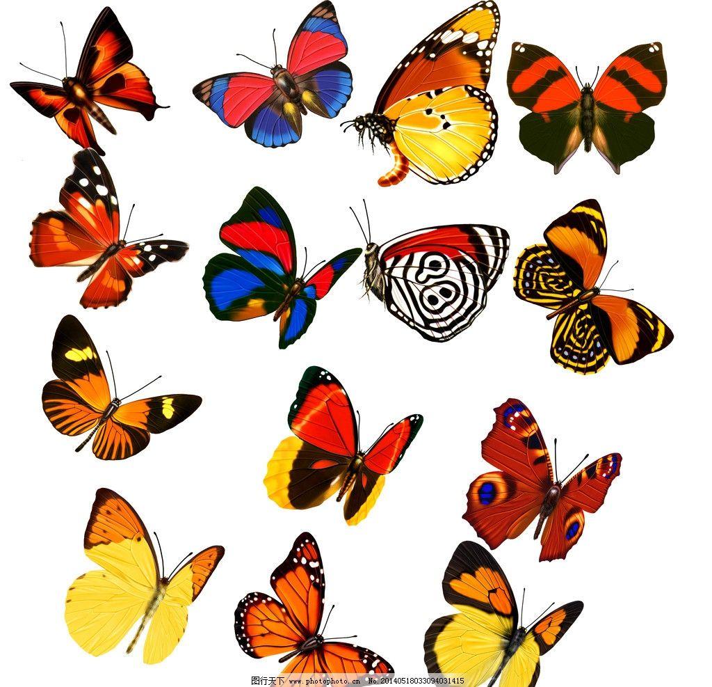 红色蝴蝶 蝴蝶设计 各种蝴蝶 蓝色蝴蝶 精美蝴蝶 蝴蝶花纹 手绘蝴蝶