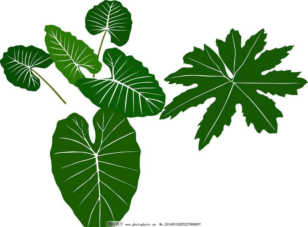 绿色叶子 叶子 绿色 乔叶 植物 室内植物 树木树叶 生物世界 矢量 ai