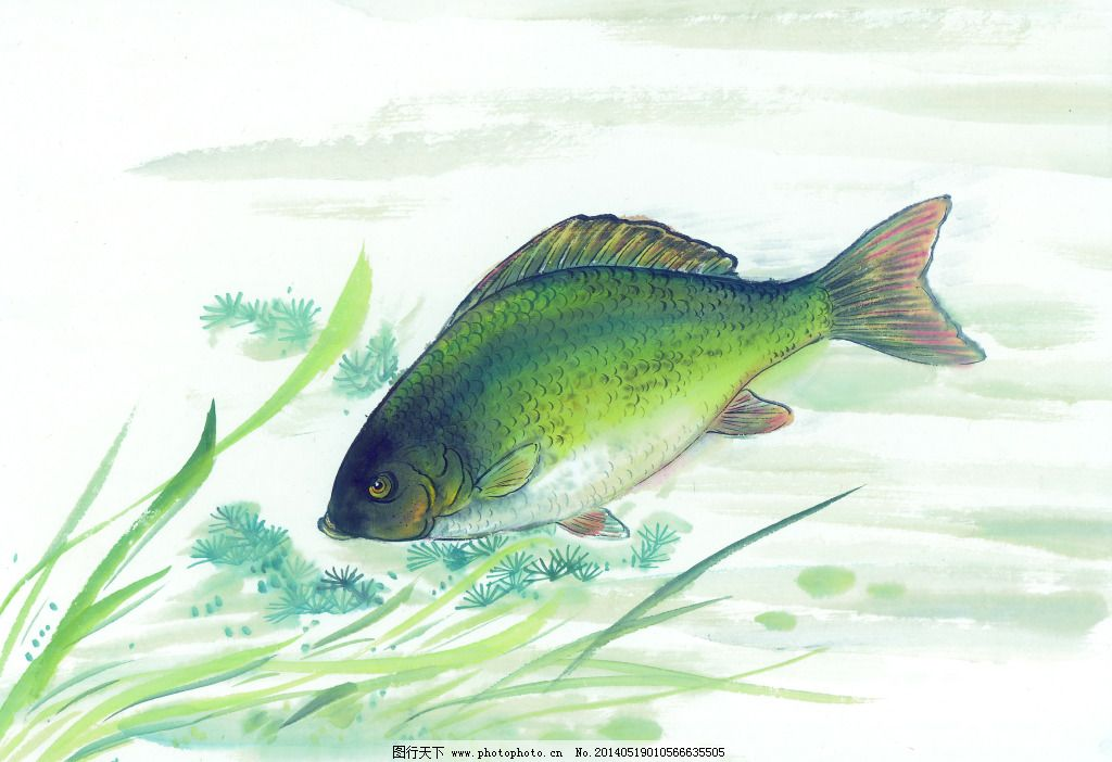 彩铅画鱼图片步骤