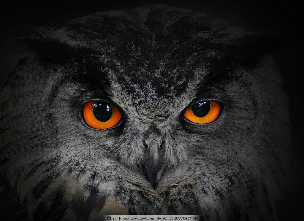 猫头鹰凝望图片,猫头鹰特写高清图片 眼神 眼睛 头-图