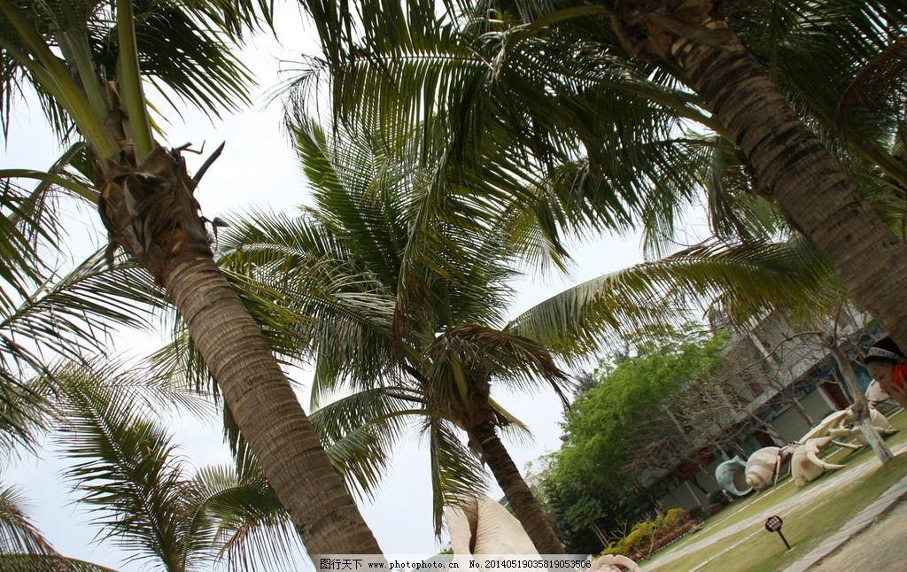 椰树 海南 三亚 椰林 热带雨林 树木树叶 生物世界 摄影 72dpi jpg