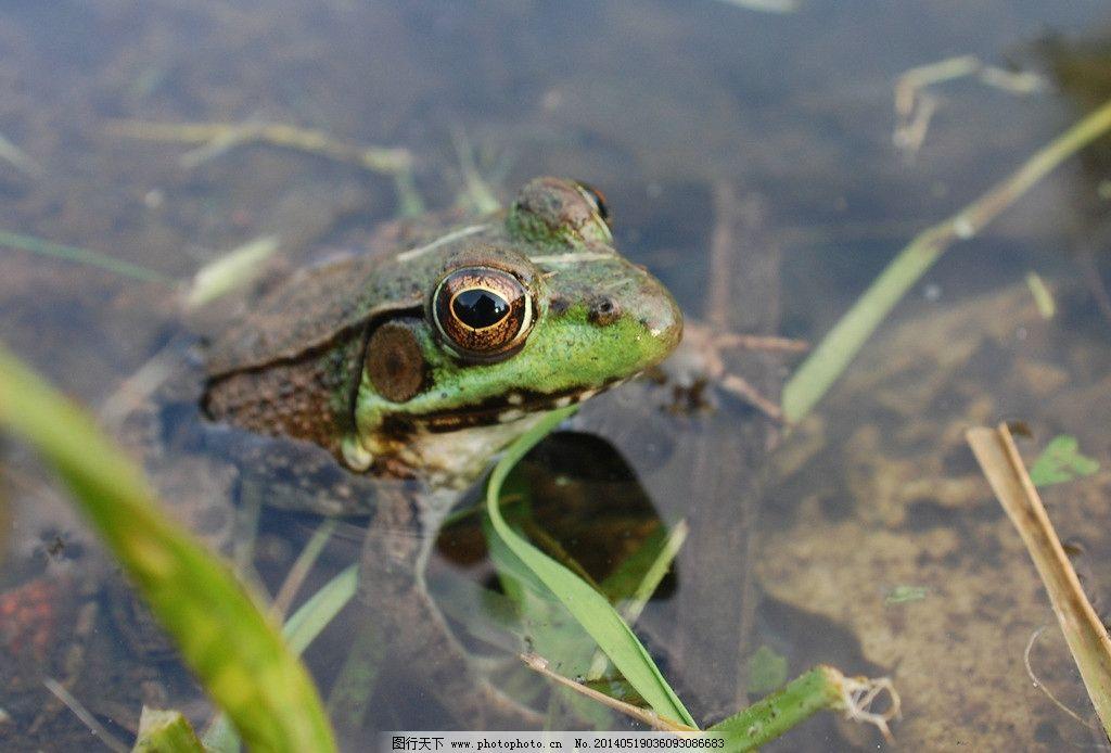 动物青蛙gif