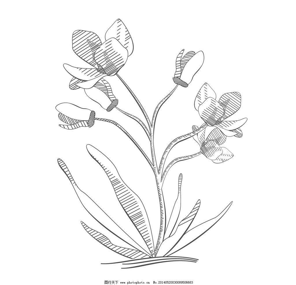 画素描花卉步骤