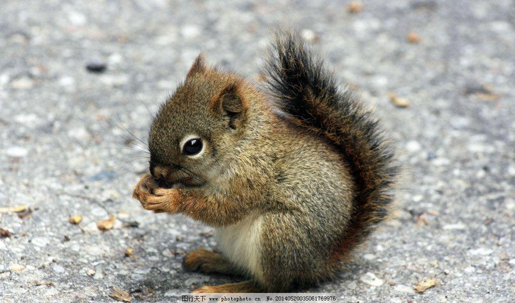 小动物 松鼠