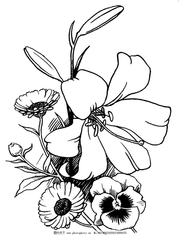 植物素描图片