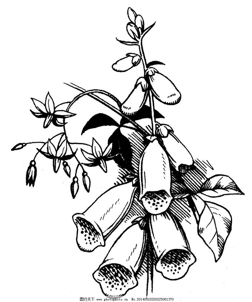 植物素描 植物 素描 黑白