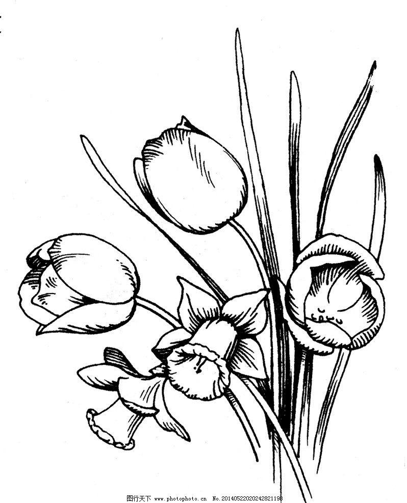 植物素描 植物 素描 黑白 古典 细腻 黑白图案 背景底纹 底纹边框