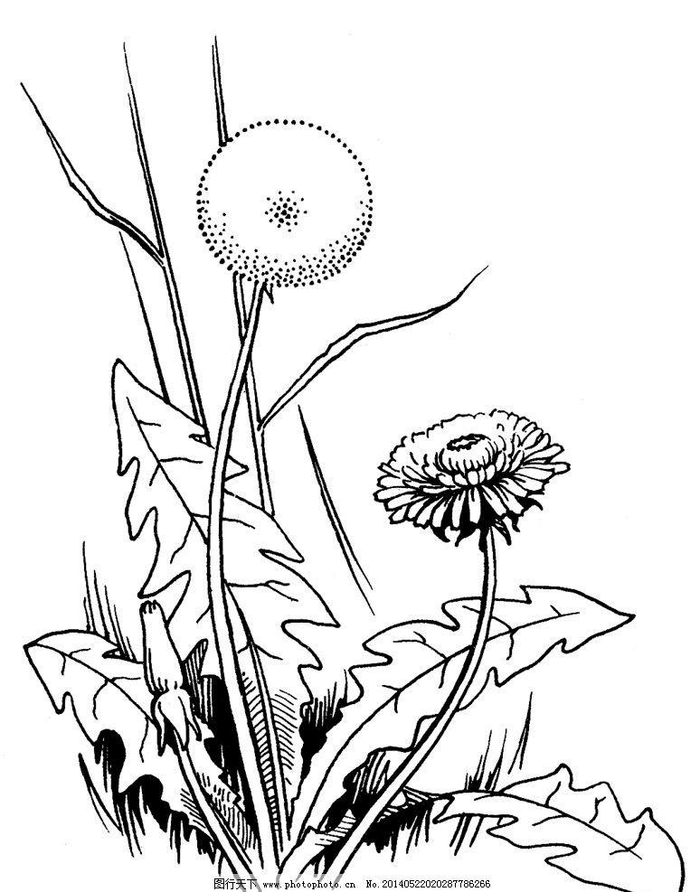 马克笔手绘热带植物