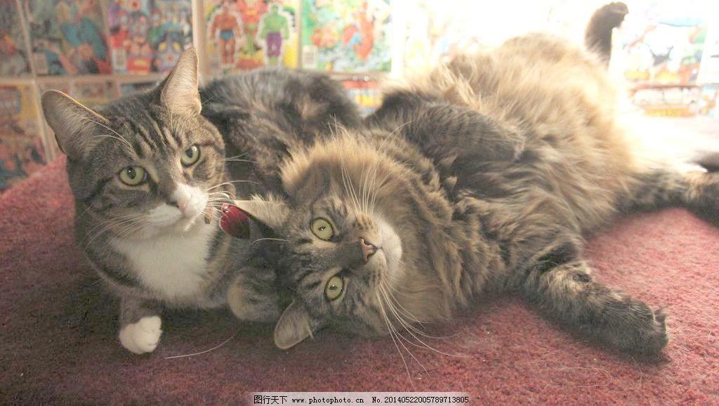 壁纸 动物 猫 猫咪 小猫 桌面 1024_578