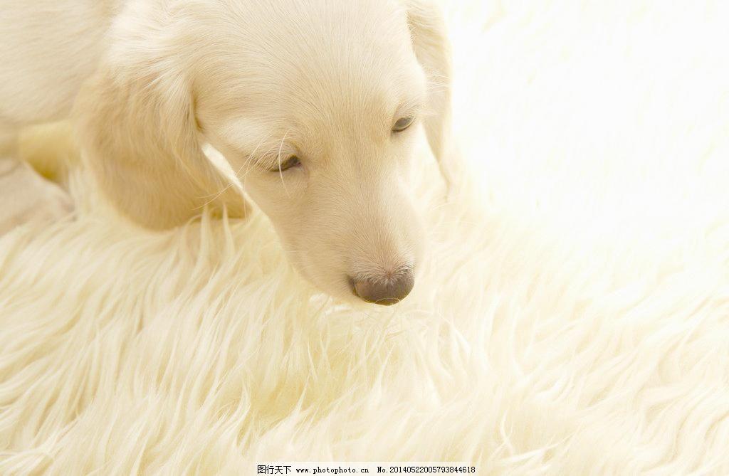 可爱狗狗图片免费下载