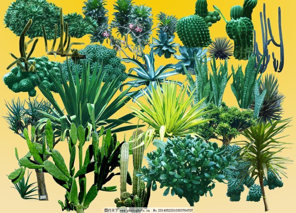 psd 分层 环境设计 金星 景观设计 芦荟 绿化 绿色 沙漠 耐旱类植物