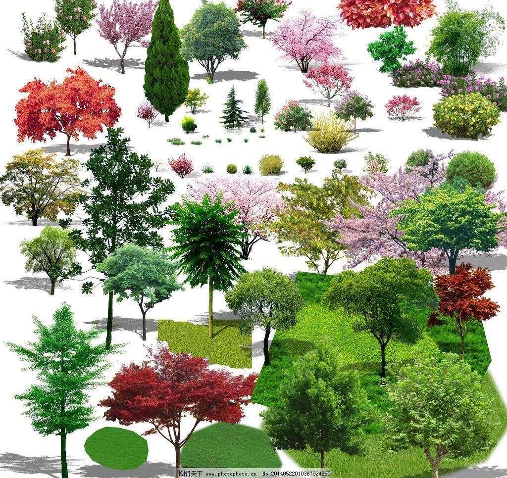 园林设计手绘柳树