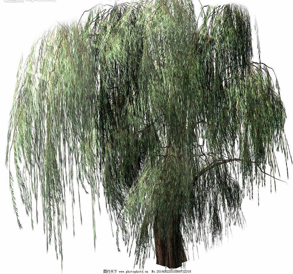 树木 园林 园林设计 源文件库 柳树素材下载 柳树模板下载 柳树 园林