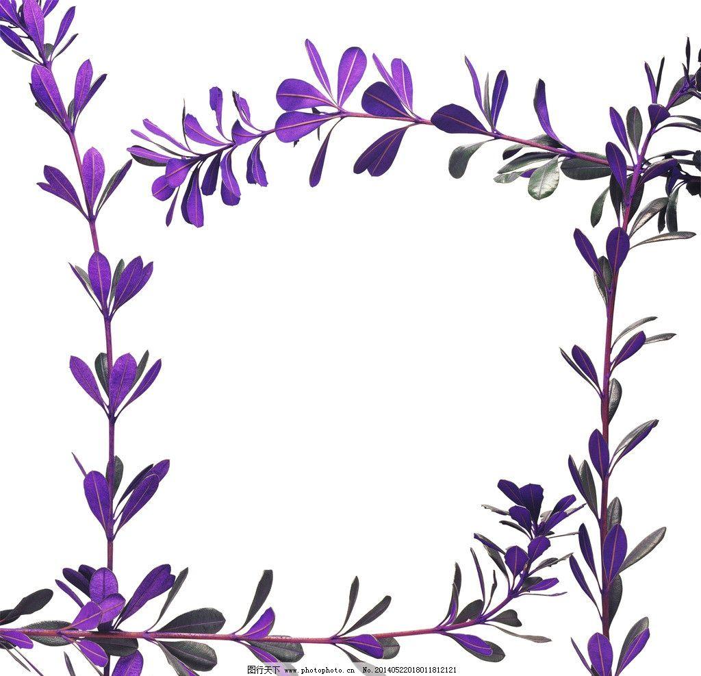 花朵边框 花瓣 白色 花边 花粉 花心 花叶子 花草 生物世界图片