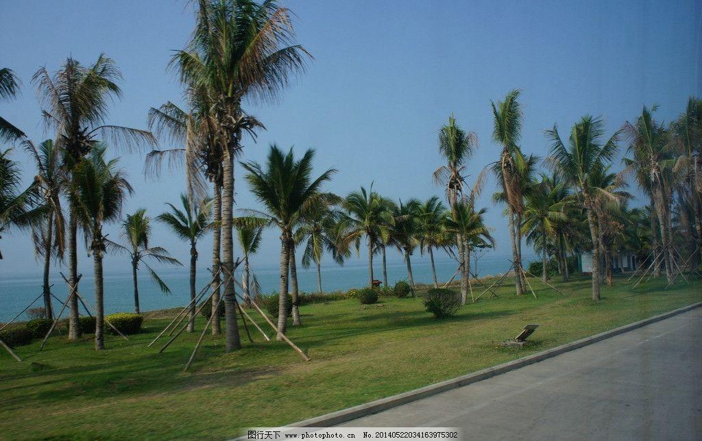 海边椰林图片_自然风景