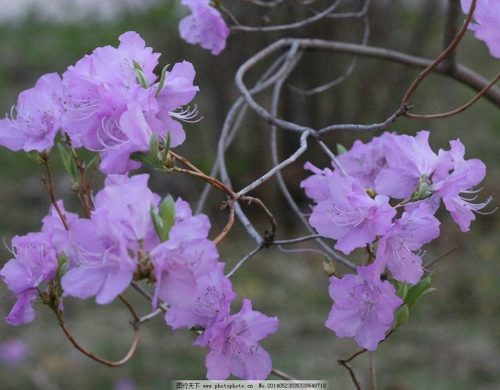 小花 树枝 绿叶 紫花 绽放 花草 生物世界 摄影 72dpi jpg