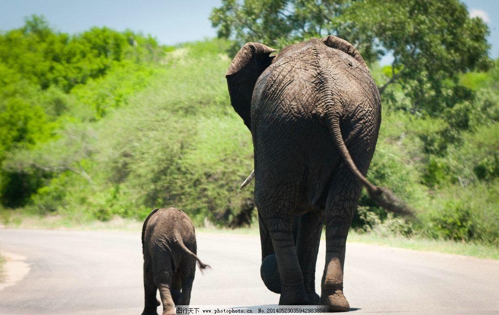 两只大象 野生动物 可爱动物 母爱 背影 在路上 大与小 爱 大象 行走