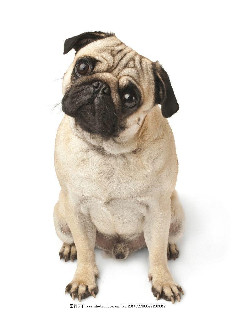 歪脑袋狗 动物 可爱的动物 思考 思考者 狗 癞皮狗 歪脑袋 家禽家畜