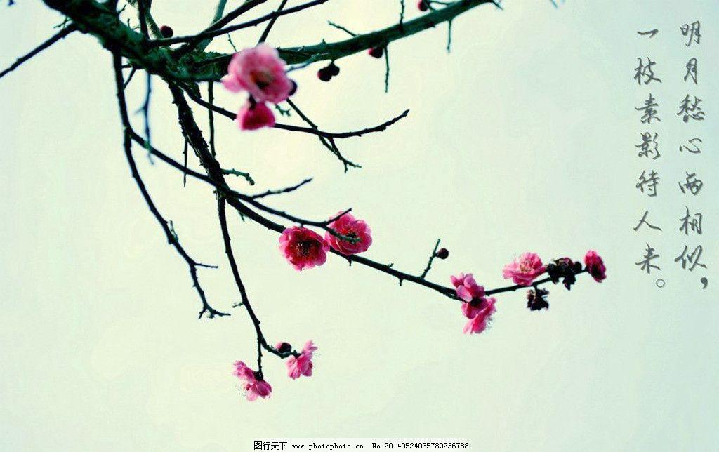 梅花样式棂花图片