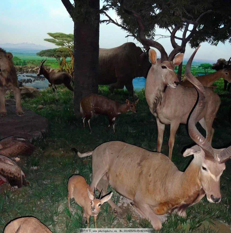 羚羊 野生动物 动物模型