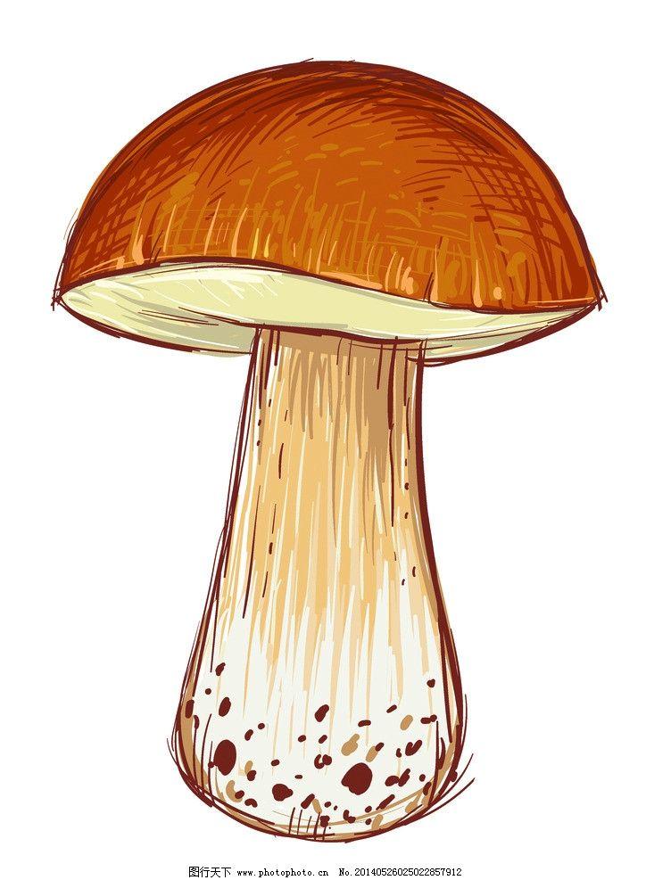 蘑菇 蔬菜 食用菌 香菇 手绘 美食 食材 鲜美 可口 新鲜 食物原料
