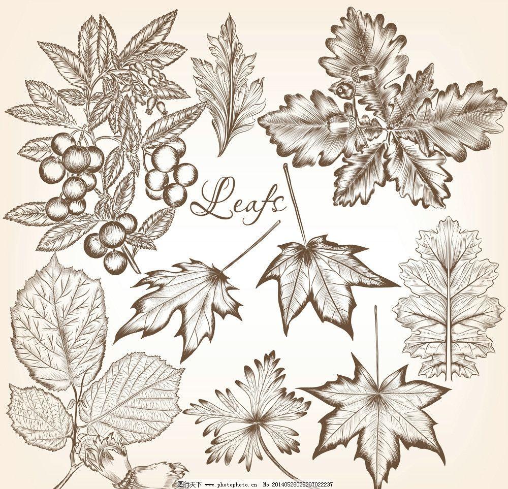 树叶 植物 树叶边框 手绘 树木树叶 生物世界 矢量素材 矢量 ai