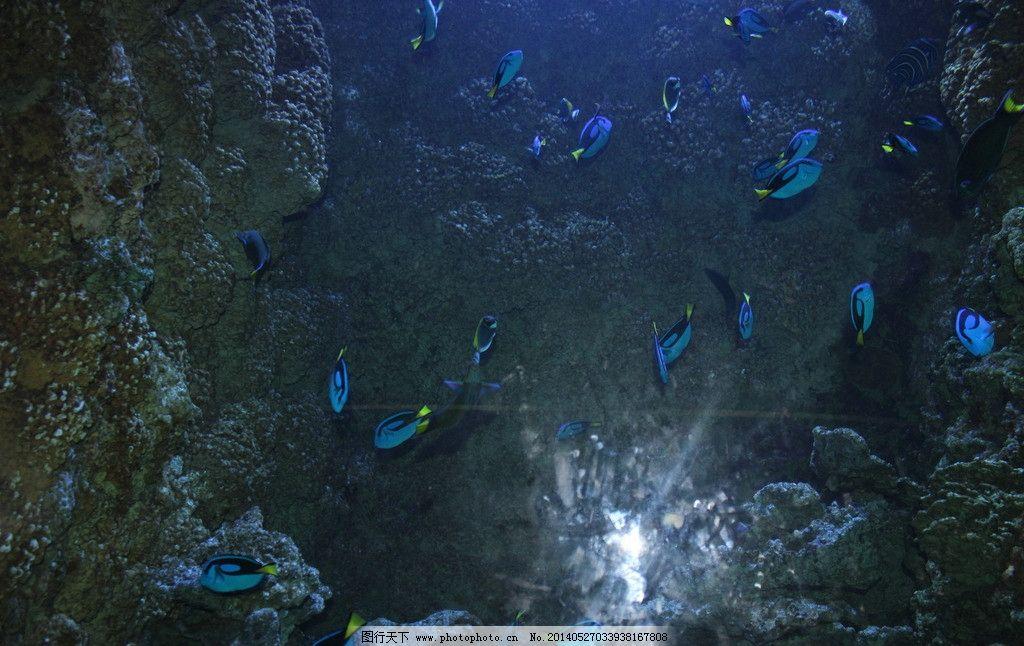 青岛海洋馆图片
